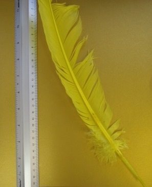 yellow indian feather