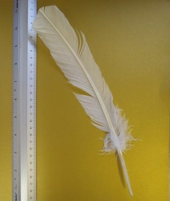 white indian feather