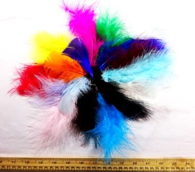 Chick Feathers